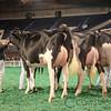 NAILE_Holstein17-226