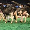 NAILE_Holstein17-233