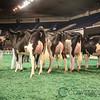 NAILE_Holstein17-224