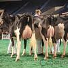 NAILE_Holstein17-221