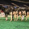 NAILE_Holstein17-234