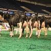 NAILE_Holstein17-235