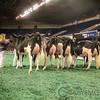 NAILE_Holstein17-225