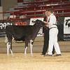 NYSpring17_Holstein_IMG_5775