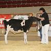 NYSpring17_Holstein_IMG_5771