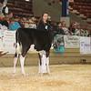 NYSpring17_Holstein_IMG_5763