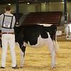 NYSpring17_Holstein_IMG_5758