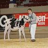 NYSpring17_Holstein_IMG_5772