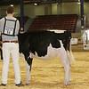 NYSpring17_Holstein_IMG_5759