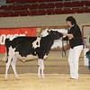 NYSpring17_Holstein_IMG_5769