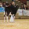 NYSpring17_Holstein_IMG_5766