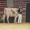 NYSpring17_Holstein_IMG_6645