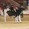 NYSpring17_Holstein_IMG_6655