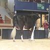 NYSpring17_Holstein_IMG_6641