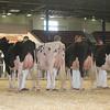 NYSpring17_Holstein_IMG_6660