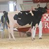 NYSpring17_Holstein_IMG_6650