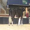 NYSpring17_Holstein_IMG_6642