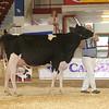 NYSpring17_Holstein_IMG_6653