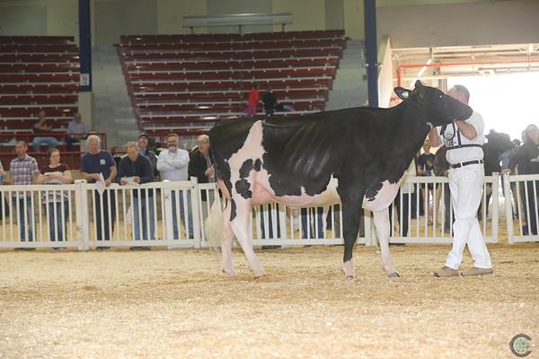 NYSpring17_Holstein_IMG_6654