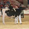 NYSpring17_Holstein_IMG_6656