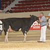NYSpring17_Holstein_IMG_6647