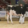 NYSpring17_Holstein_IMG_6651