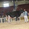 NYSpring17_Holstein_IMG_7098