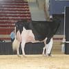 NYSpring17_Holstein_IMG_7093