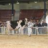 NYSpring17_Holstein_IMG_7102