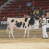 NYSpring17_Holstein_IMG_7097