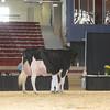 NYSpring17_Holstein_IMG_7095