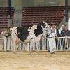 NYSpring17_Holstein_IMG_7103
