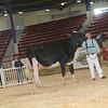 NYSpring17_Holstein_IMG_7101