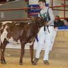 NYSpring17_MilkingShorthorn_L32A0007