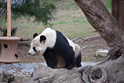 National Zoo 2017