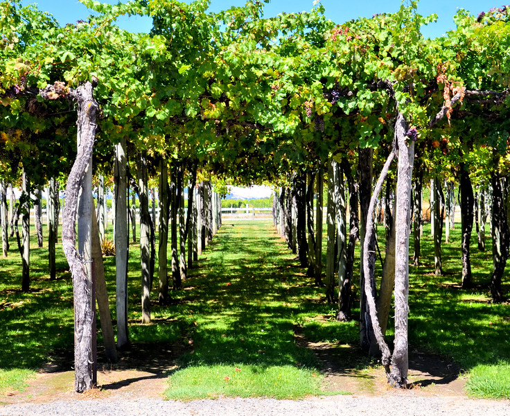 Hunter's Vineyard near Picton