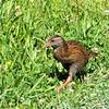 Wingless bird at Cape Fowlwind