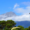 Mountains tower overhead on the Haast ahighway