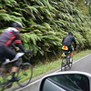 Cyclists commonly share the roads