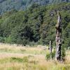 Interesting tree stump