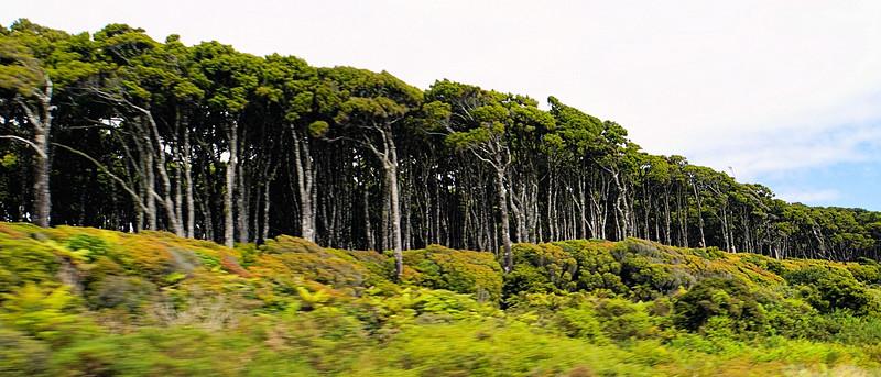 A line of trees along the roadside
