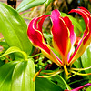 Auckland Wintergarten