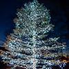 MET 112617 Tree