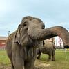 MET 100517 Elephant 1