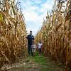 MET 100817 Corn Maze