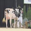 OntarioSpring17_Holstein_IMG_4827