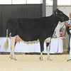 OntarioSpring17_Holstein_IMG_4817