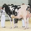 OntarioSpring17_Holstein_IMG_4820