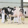 OntarioSpring17_Holstein_IMG_4821
