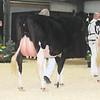 OntarioSpring17_Holstein_IMG_4824
